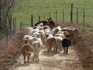 The Sheep-way is for easy movement of the flock / herd.