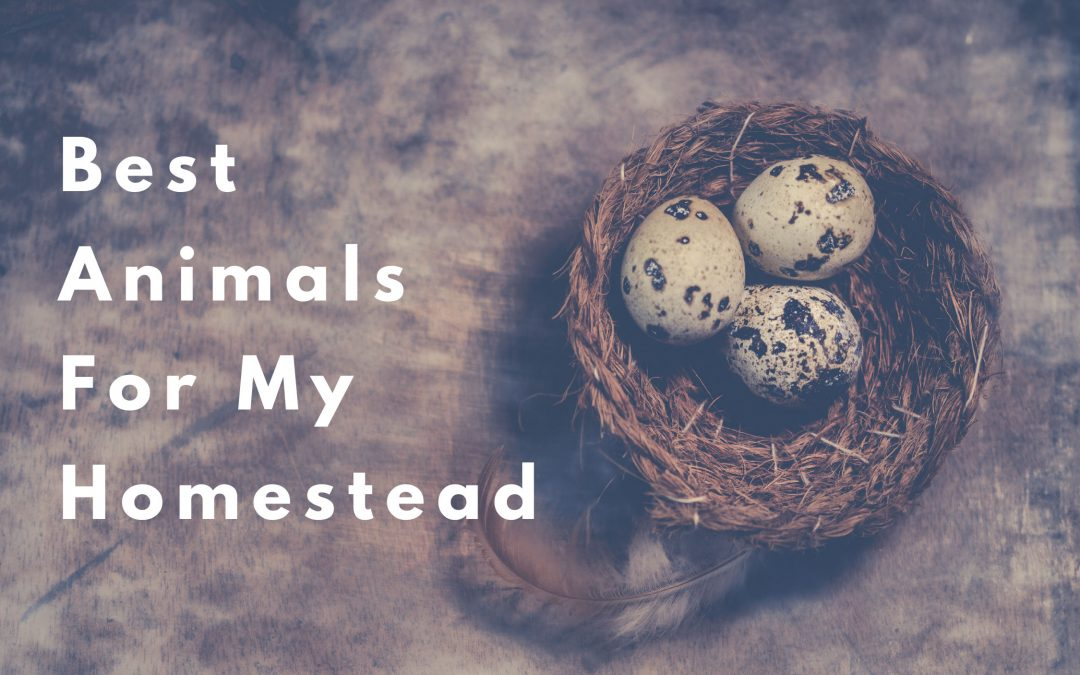 best animals for a homestead
