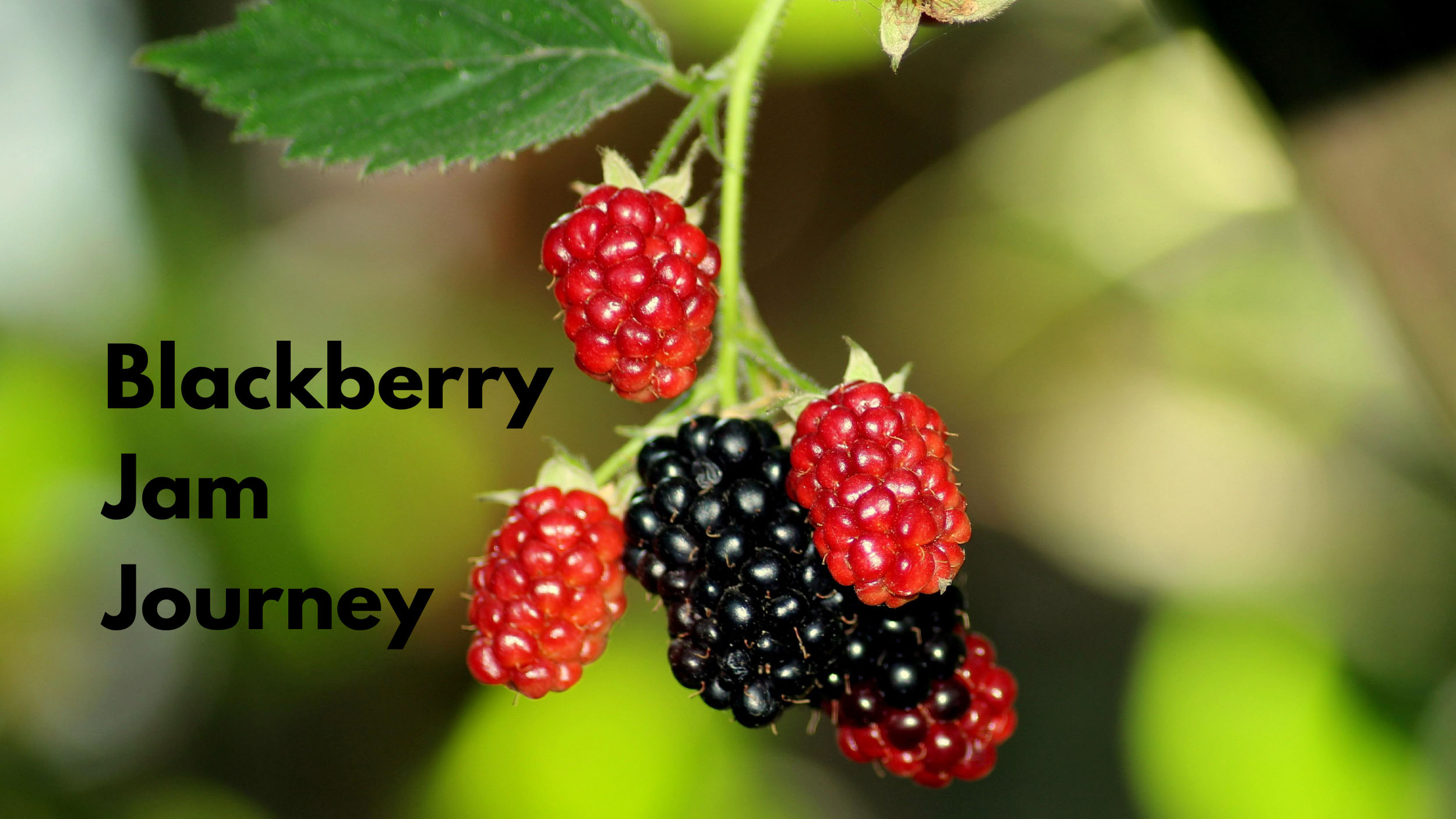 The Blackberry Jam Journey