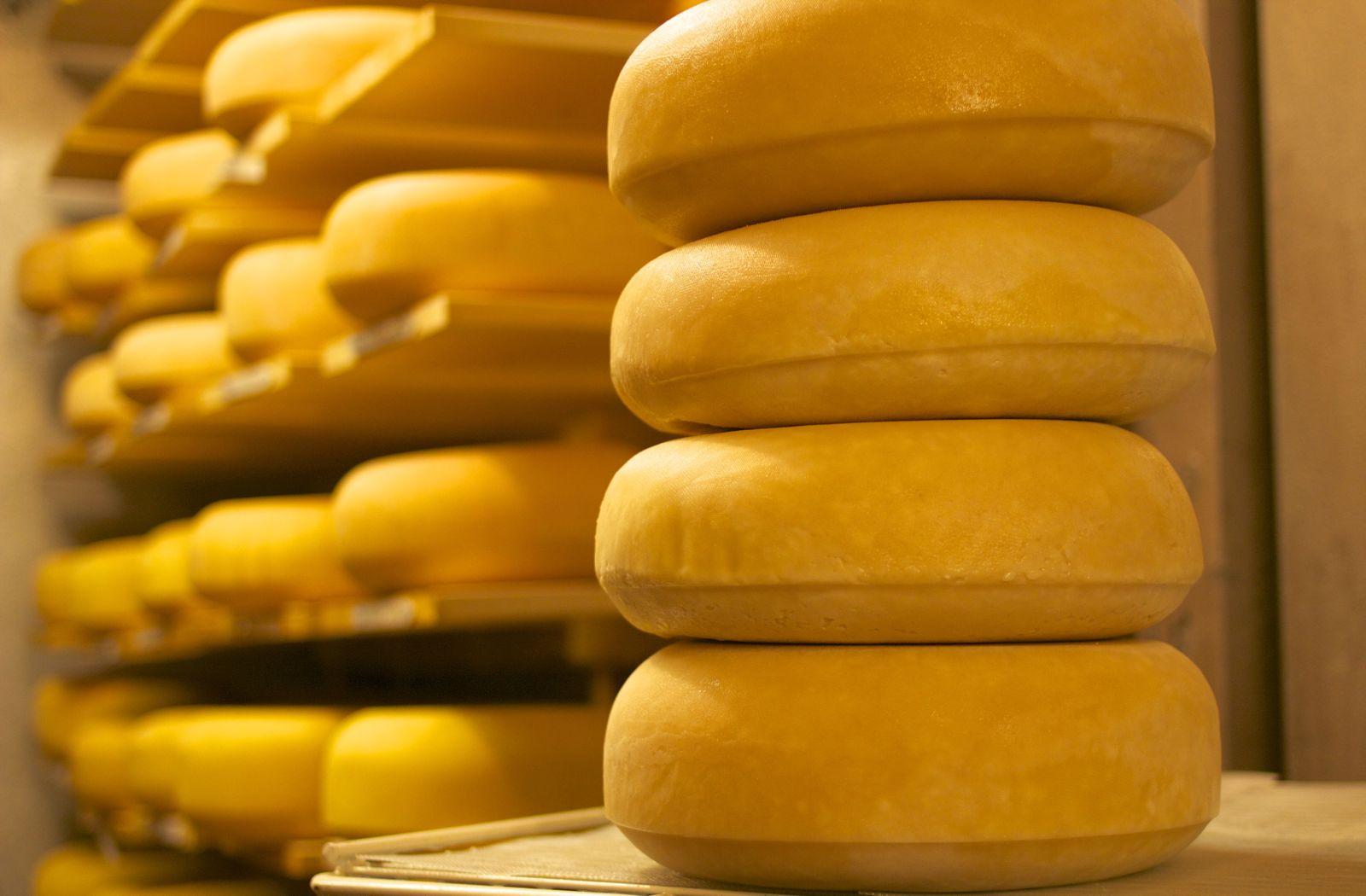 The Basics of Cheesemaking