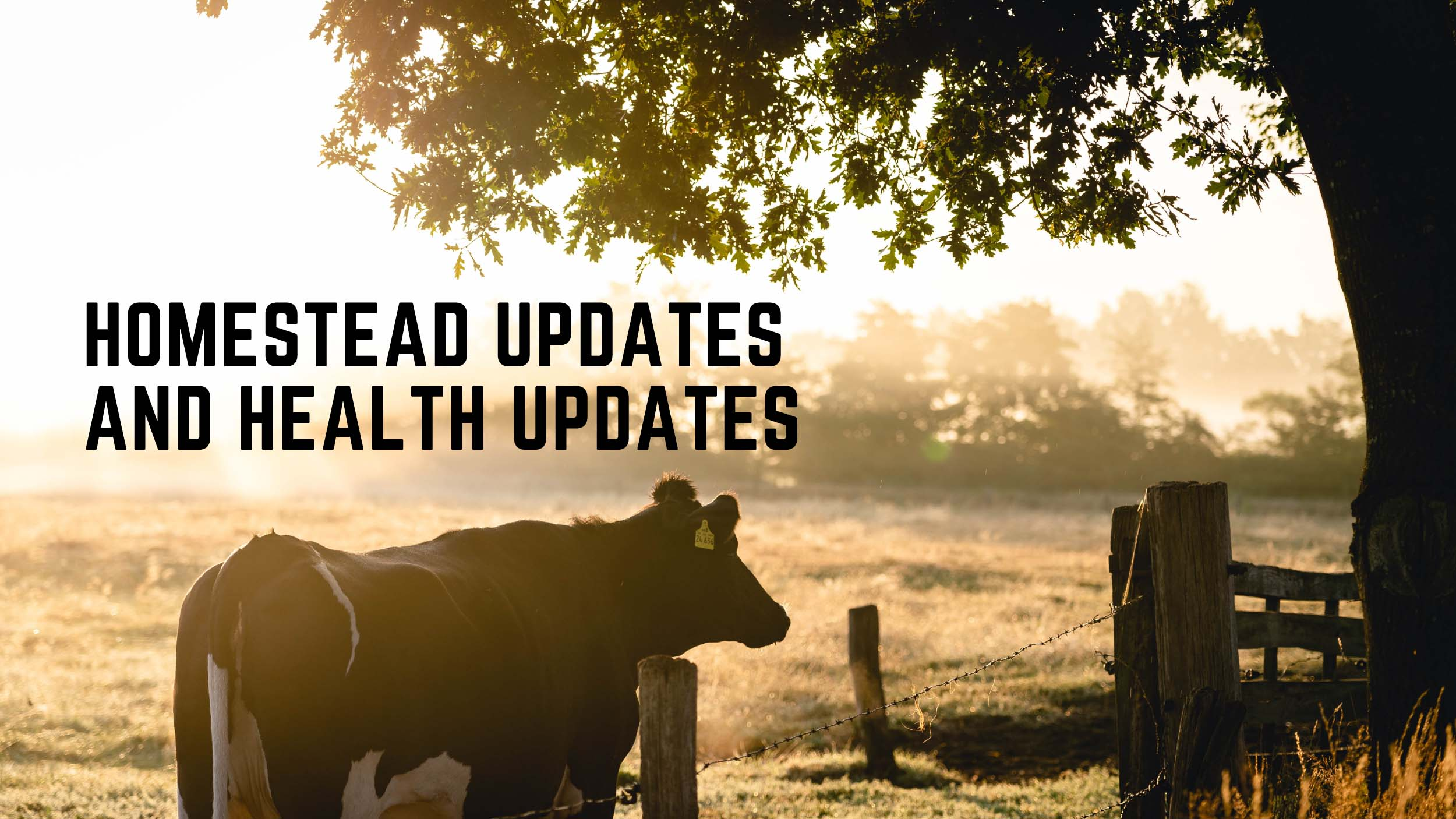 Homestead Update and Health Update