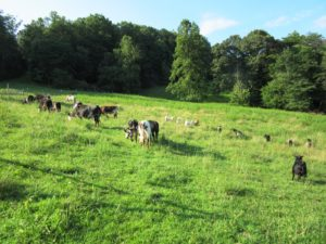 Animal Husbandry and Farm Exercise