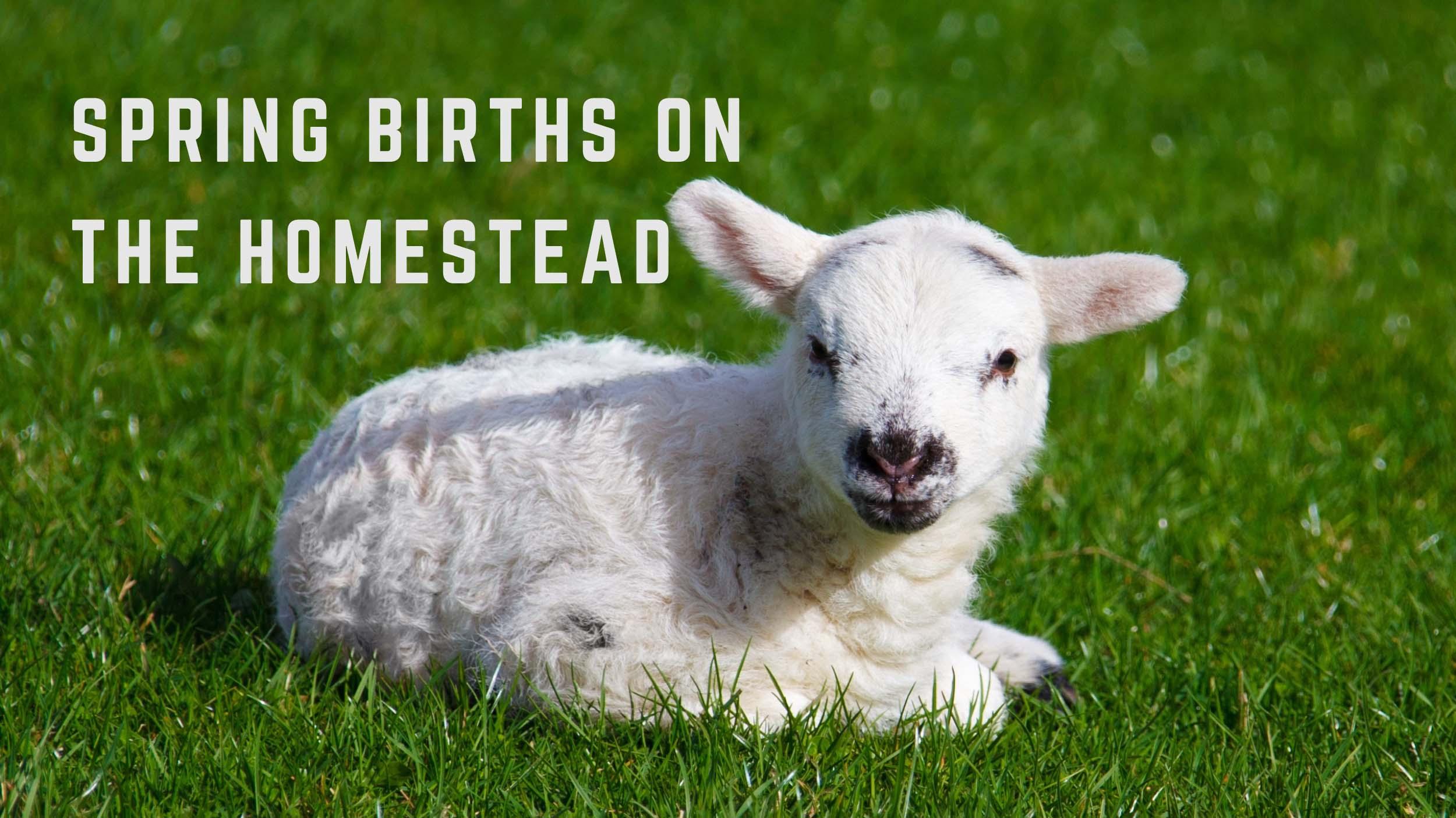 Spring Birth on the Homestead