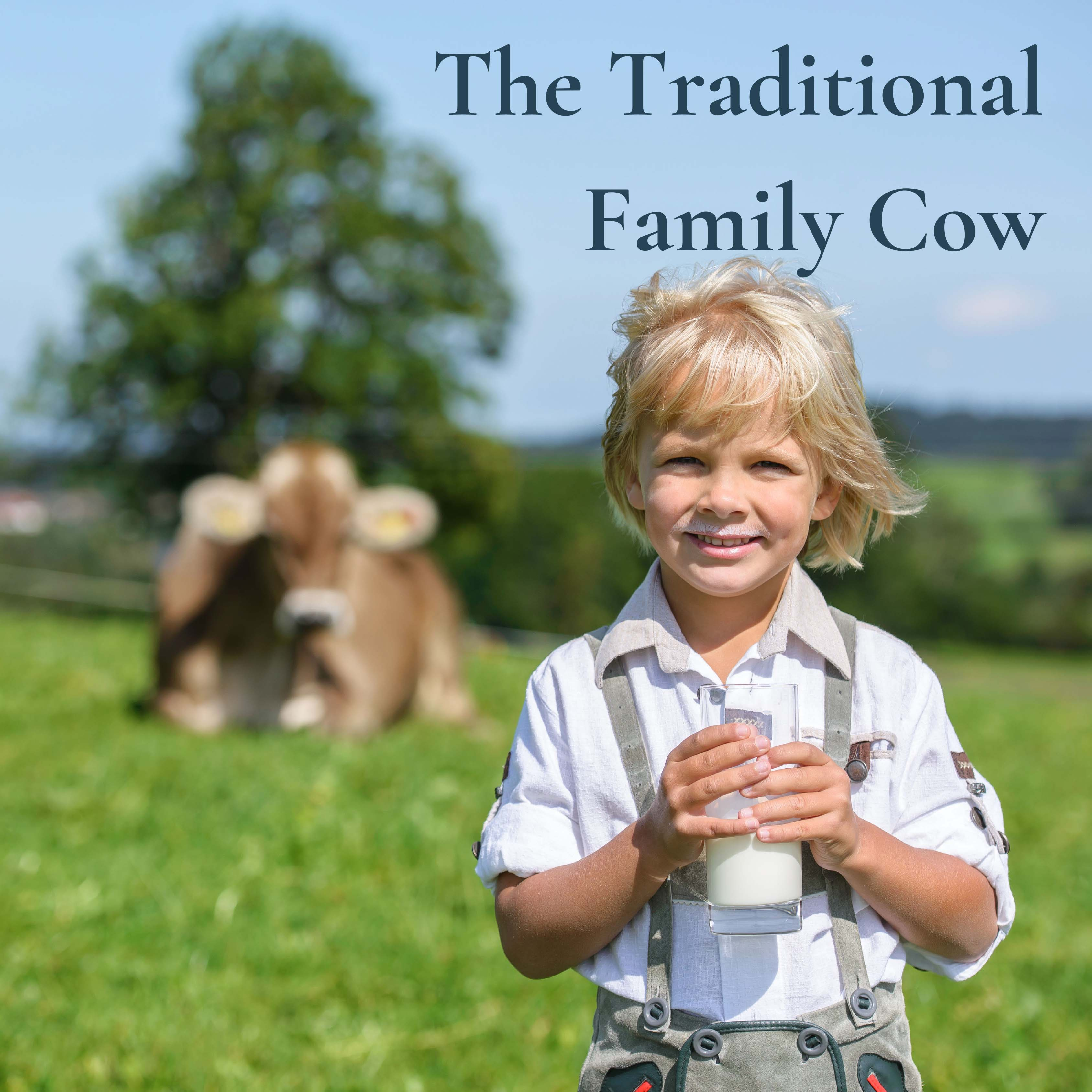 The Traditional Family Cow
