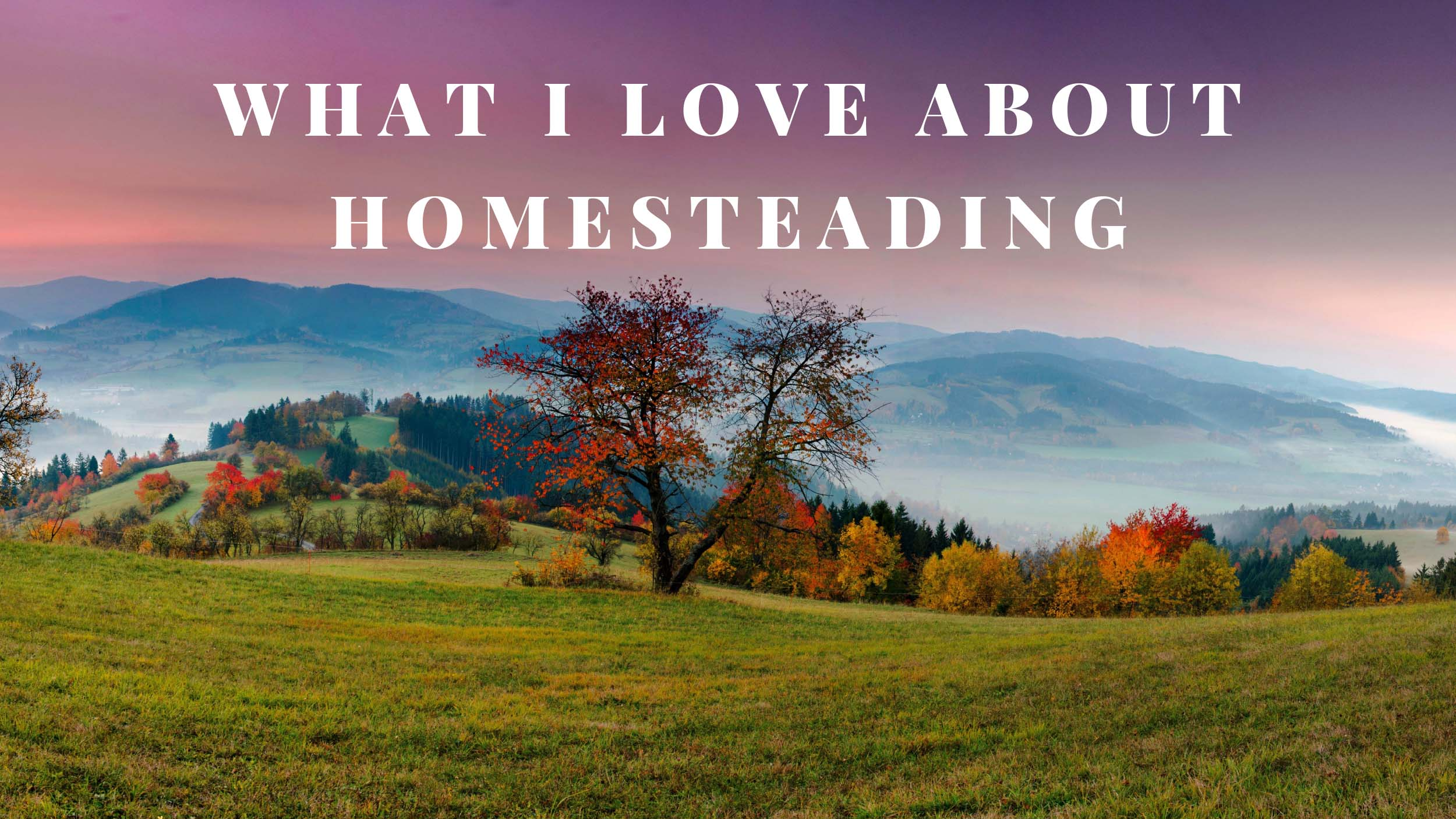 What I Love About Homesteading