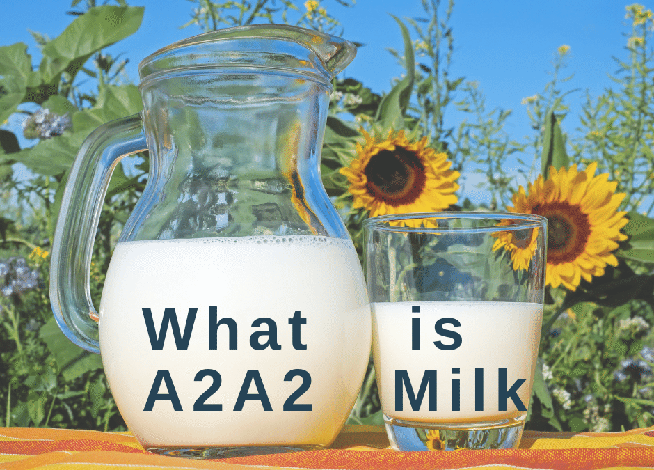 What is A2A2 Milk