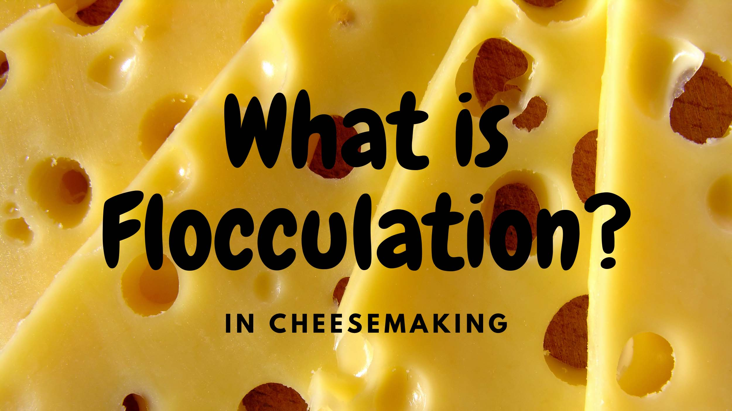 What is Flocculation in Cheesemaking?