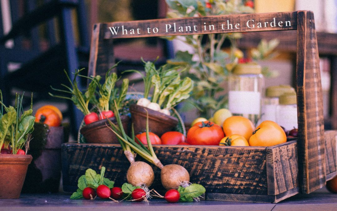 what to grow in the garden