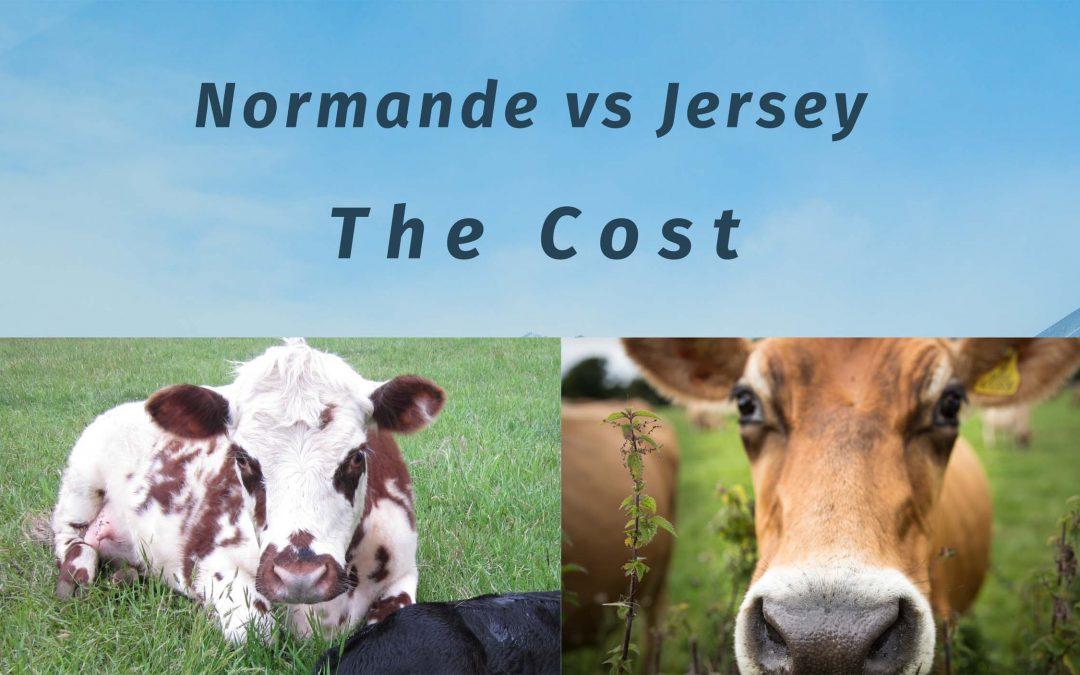 normande vs jersey